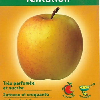 Pomme Golden Tentation