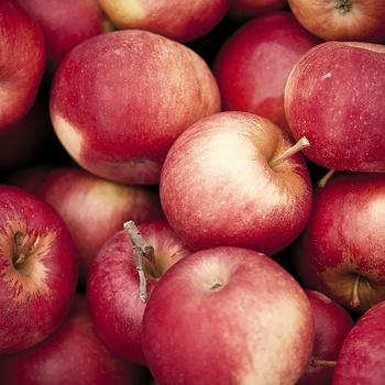 Pommes issues de l''agriculture raisonnée