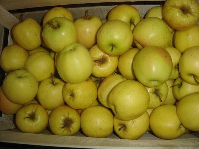 Pommes Golden golden