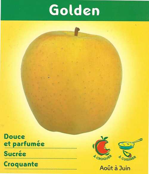 Pommes Golden goldenid