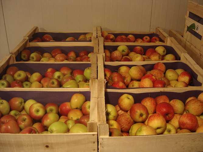 Pommes Royal Gala royalgala