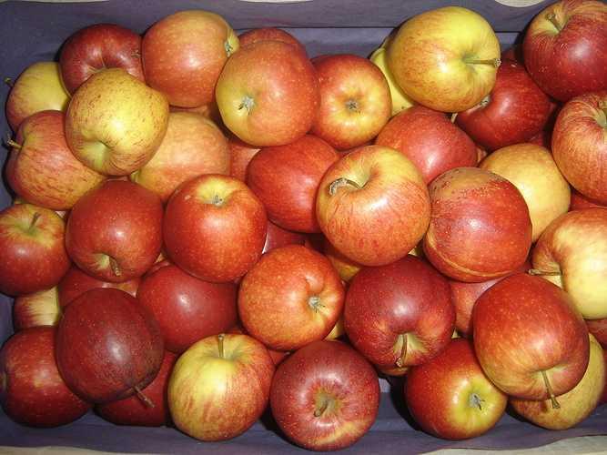Pommes Braeburn braeburn
