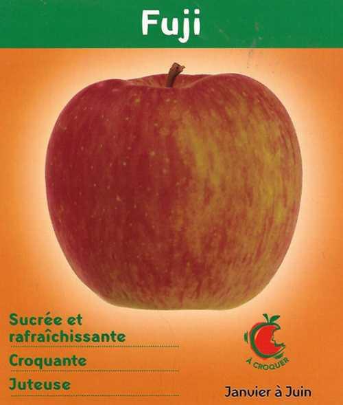 Pommes Fudji fujii