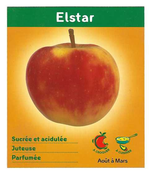 Pommes Elsar elstarid