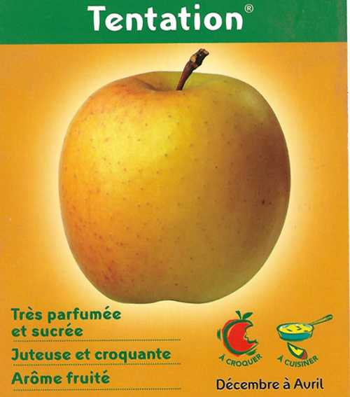Pomme Golden Tentation 0